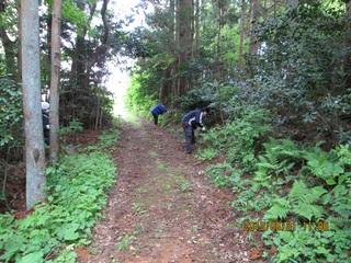照葉樹林2-2.jpg