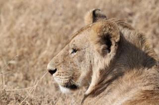 ライオン (2).JPG